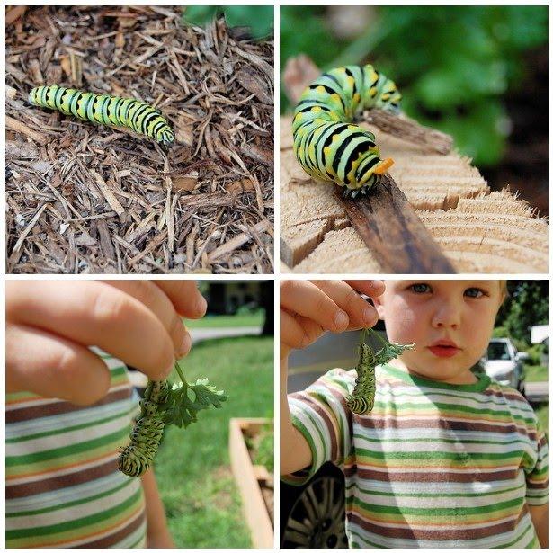 caterpillarmosaic-1