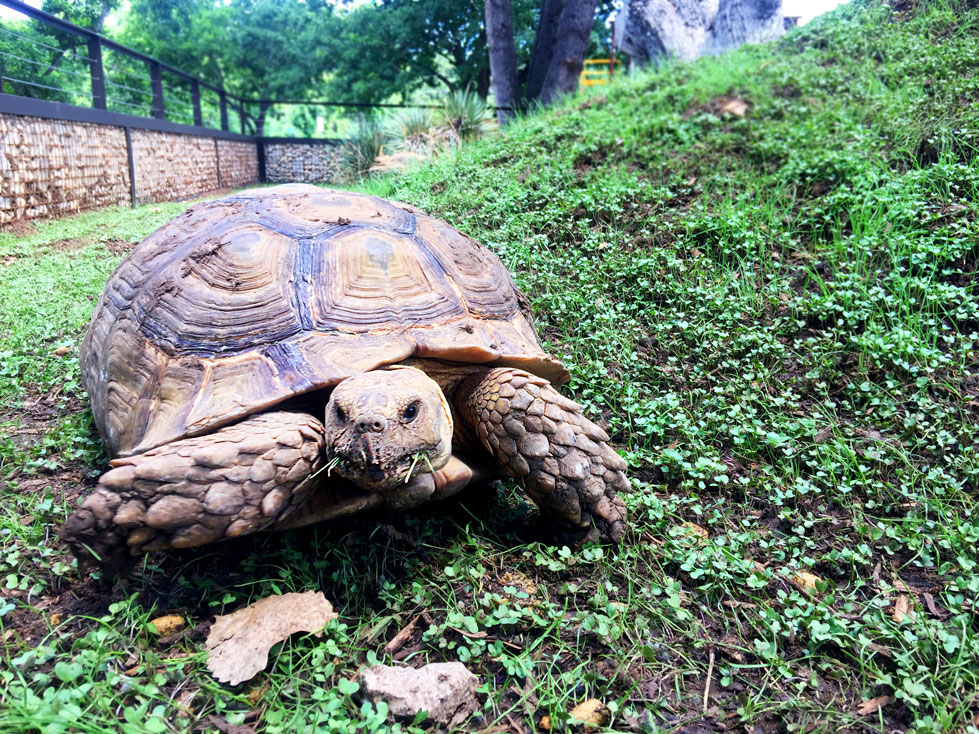 science-mill-johnson-city-tortoise